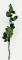 Coada trandafir criogenat